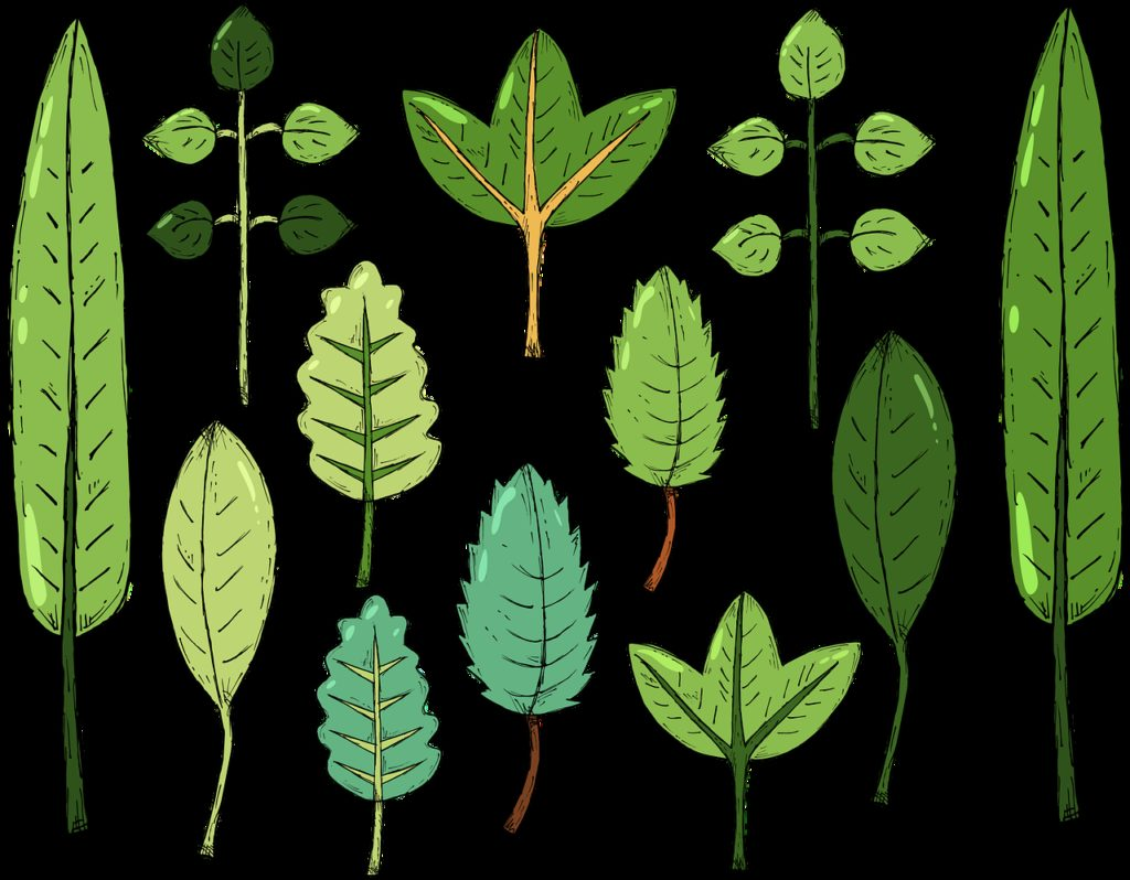 leaves, plant, nature